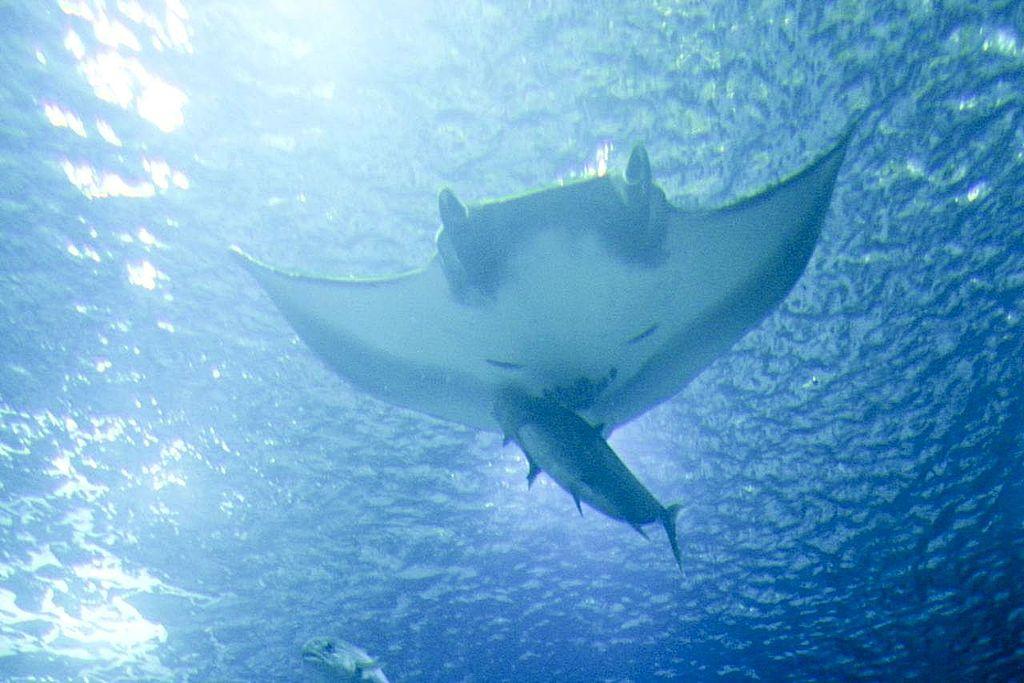 Underwater-Ocean_underwater_fish.jpg