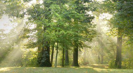 640px-Oak-Maple-Woods_in_Summer