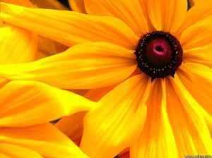 big-yellow-flower-8d