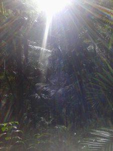 Foto por Samadhi Yaisha en El Yunque, Puerto Rico. Copyright © 2013.