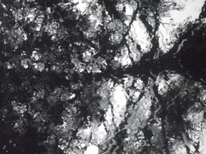 Glass,_araucaria_&_rain_02
