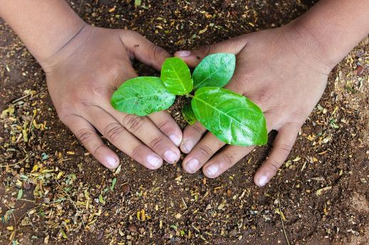 Plant_a_Sapling_for_Better_Future