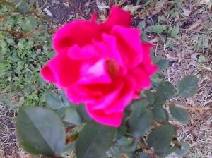 A friend in my garden. Photo by Samadhi Yaisha, 2014