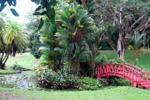 Estanque de flores de loto, Jardín Botánico de Río Piedras.