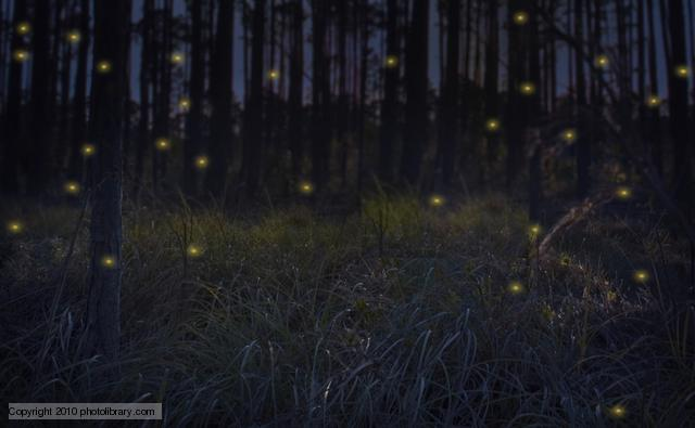 Group of fireflies in a forest