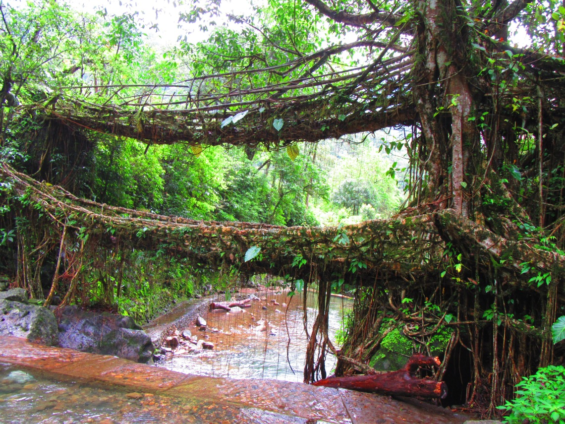 double_decker_living_root_bridge_at_meghalaya