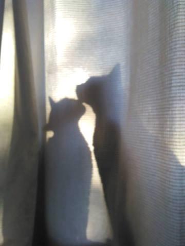 Escondiéndose detrás de la cortina