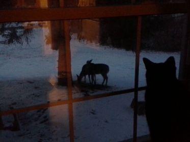 Romeo mirando los venados por la ventana en Unity Village, Missouri